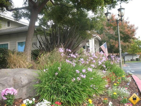 Clovis CA photo #1