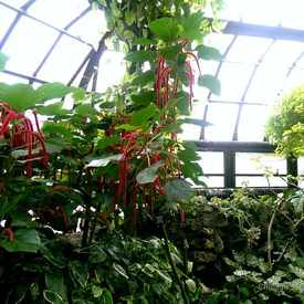 Photo of Lincoln Park Conservatory