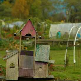 Photo of Coquitlam Community Garden