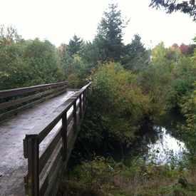 Photo of Fanno Creek City Park