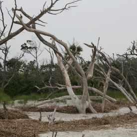 Photo of Boneyard Beach, Capers Island
