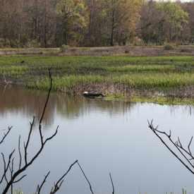 Photo of CawCaw Charleston County Park