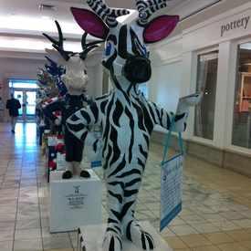 Photo of Zebra Buck