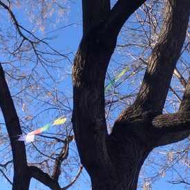 Photo of Prayer Flags