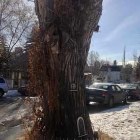 Photo of Birdhouse Tree