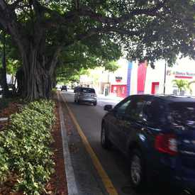 Photo of Tree Lined Streets