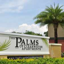 Rental info for The Palms of Clearwater