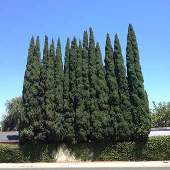 Photo of Western Ave Tree Wall in West Anaheim, Anaheim