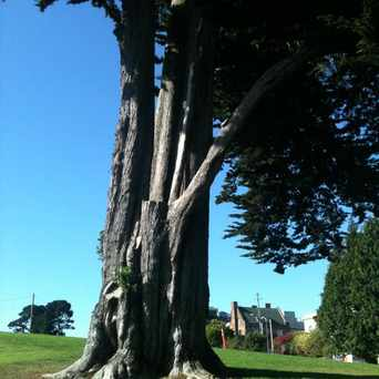 Photo of Alta Plaza Park in Lower Pacific Heights, San Francisco