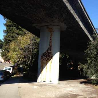 Photo of Giraffes, Public Art in Piedmont Avenue, Oakland