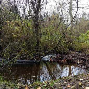 Photo of Middle Bear Creek Natural Area in Union Hill-Novelty Hill