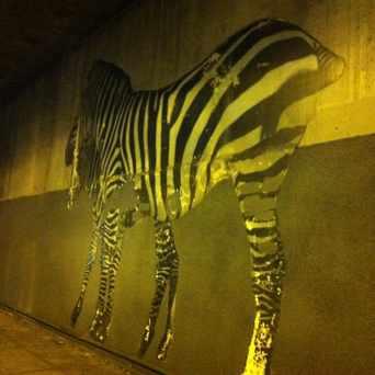 Photo of Walking Zebras Under Bridge in Shafter, Oakland