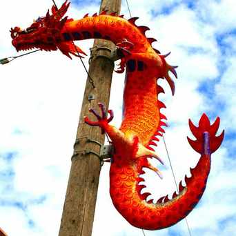 Photo of Dragons on Lampposts in Seattle