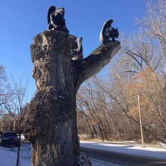 Photo of Gargoyle Tree in Sunnyside, Calgary