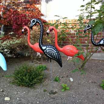 Photo of Undead Flamingos in Laurelhurst, Seattle