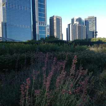 Photo of Lurie Garden in Grant Park, Chicago
