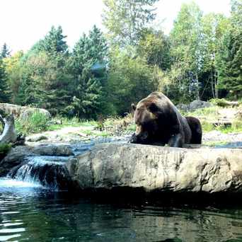 Photo of Brown Bear in Phinney Ridge, Seattle