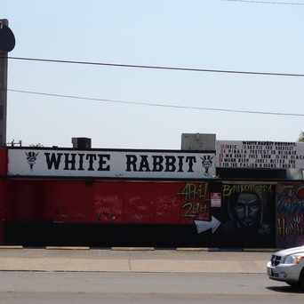 Photo of White Rabbit in San Antonio