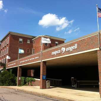 Photo of Angell Animal Medical Center in Jamaica Hills - Pond, Boston