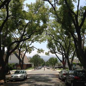 Photo of Tree Lined Street in Glendale