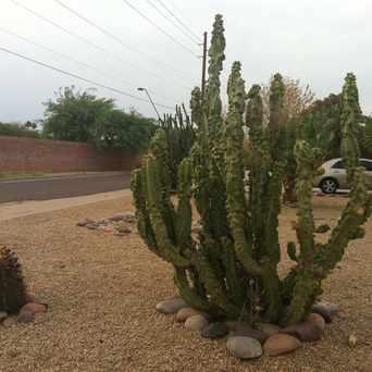 Photo of Cactus in Sunset, Tempe