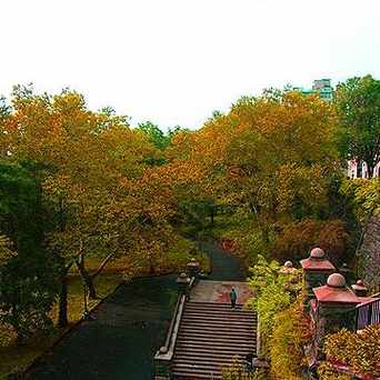 Photo of Foliage in Manhattan in West Harlem, New York