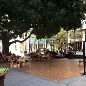 Photo of Relax Under The Trees in San Jose