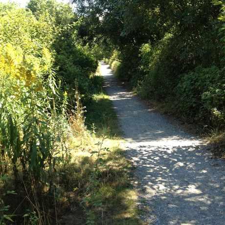 Photo of Longfellow Creek Trail in Roxhill, Seattle