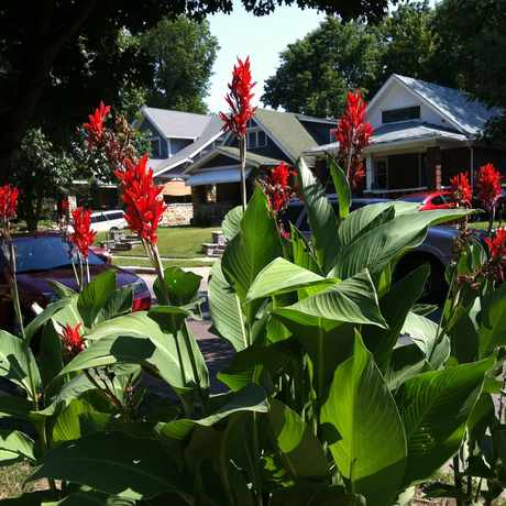 Photo of South Hyde Park Flowers in South Hyde Park, Kansas City