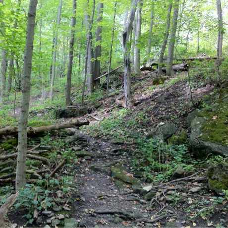 Photo of Rockcliffe Trails in Hamilton