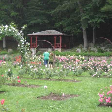 Photo of Memorial Rose Gardens in Norwich