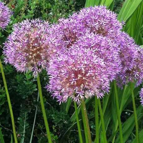 Photo of Bellevue Botanical Garden in Wilburton, Bellevue