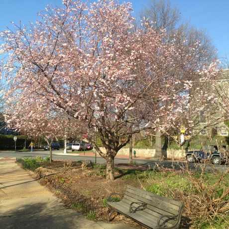 Photo of Garfield Park in Washington D.C.