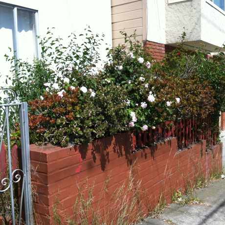 Photo of Balboa & 26th Avenue in Outer Richmond, San Francisco