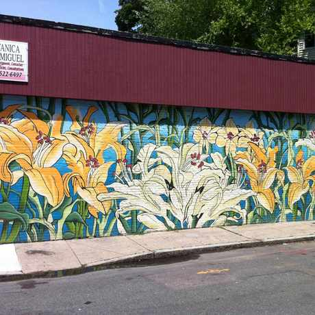 Photo of Botanica San Miguel Mural in Jamaica Central - South Sumner, Boston