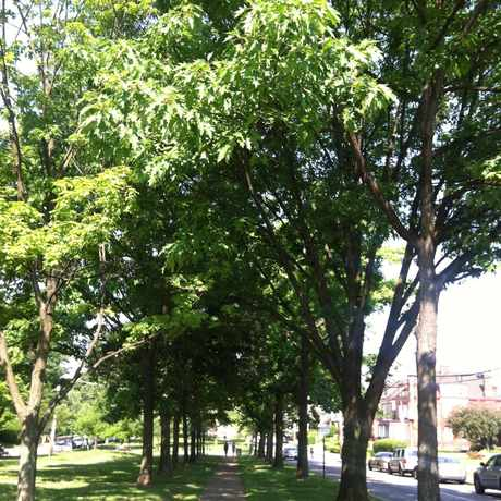 Photo of Friendship Park in Bloomfield, Pittsburgh