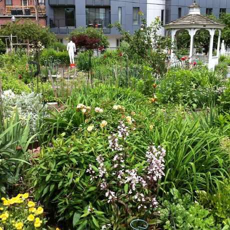 Photo of Northampton Community Garden in Lower Roxbury, Boston