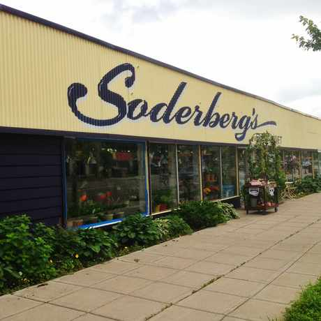 Photo of Soderberg's Floral - Gifts in Longfellow, Minneapolis