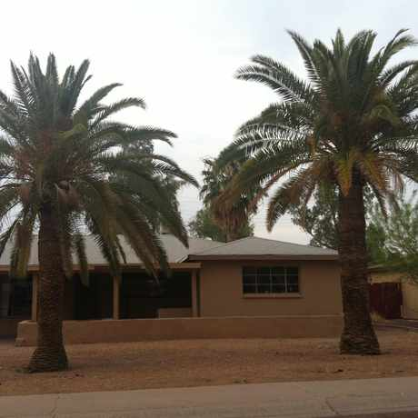 Photo of Palms in Sunset, Tempe